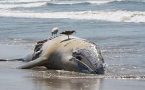 اقیانوسها در آستانه یک فاجعه عظیم
