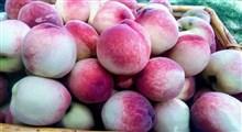 فواید و خواص درمانی میوه شفتالو