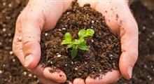 چند راه برای تقویت مؤثر خاک زراعی با نیتروژن