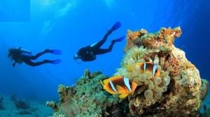 عجایب دنیای زیر آب