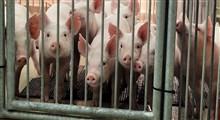 آزمایشهای درمانی بر روی حیوانات انسانی شده و زیست شناسی مصنوعی