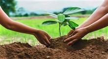 آنچه از اهمیت درخت و درختکاری باید بدانید (بخش اول)