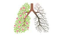 میوه و دمنوش های موثر در سلامت ریه
