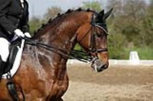 فواید اسب سواری برای سلامتی