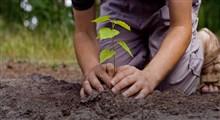 آشنایی با فواید درختکاری در جامعه (بخش اول)