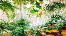 گیاهان آپارتمانی که به نور نیاز ندارند