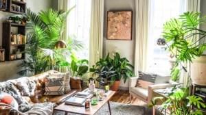 فواید شگفت انگیز نگهداری گیاه در خانه