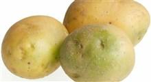 قسمت های سبز سیب زمینی را بخوریم یا نخوریم؟