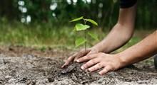 آشنایی با فواید درختکاری در جامعه (بخش دوم)