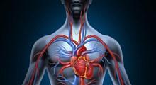 همه آنچه از گردش خون ضعیف بدن باید بدانید (بخش سوم)