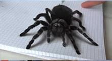 آموزش نقاشی سه بعدی عنکبوت