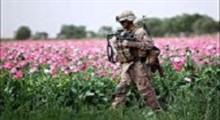 افغانستان؛ بزرگترین مرکز تولید مواد مخدر جهان