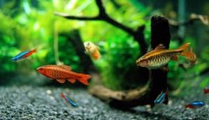 غذا خوردن ماهی از دست انسان