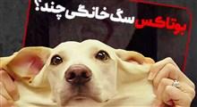 بوتاکس و عمل زیبایی بینی سگ هم رسید!