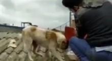فیلمی زیبا از غذا رسانی به سگها توسط نیروهای جهادی