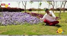 ماجراهای آقای جویا | فصل بهار