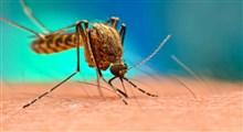 چگونه میتوان جمعیت پشهها را پایین آورد؟