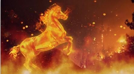 عشق به خانواده یک اسب در میان شعله های آتش