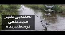 شکار حرفهای ماهی توسط پرنده