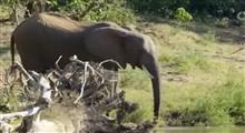 مستند پارکهای ملی آفریقا (قسمت سی و دوم)