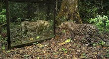 رفتار حیوانات جنگل آمازون در برابر آینه