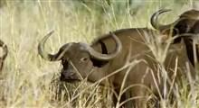 مستند پارکهای ملی آفریقا (قسمت سی و چهارم)