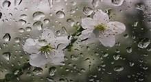 تصنیف «جشن بارون»/ محسن میرزازاده