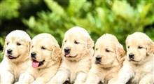 برخورد جالب مادر با توله سگ ها