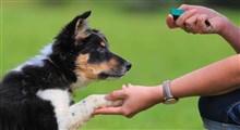 تربیت سگ ها برای تشخیص مبتلایان به کرونا