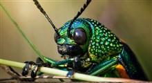 ترفندهای حشرات برای استتار خود در طبیعت