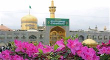 استوری امام رضایی/ سالار عقیلی