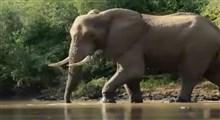 مستند پارکهای ملی آفریقا (قسمت سی و پنجم)