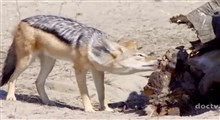 مستند پارکهای ملی آفریقا (قسمت بیست و ششم)