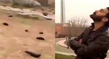 ماجرای بارش بادمجان از آسمان تهران چه بود؟+ فیلم