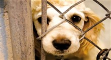 لایحه حمایت از حیوانات در هیأت دولت تصویب شد