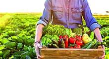 حذف دلالان با فروش آنلاین محصولات غذایی