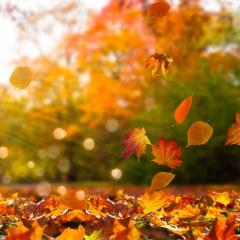 کاغذ دیواری پاییزی
