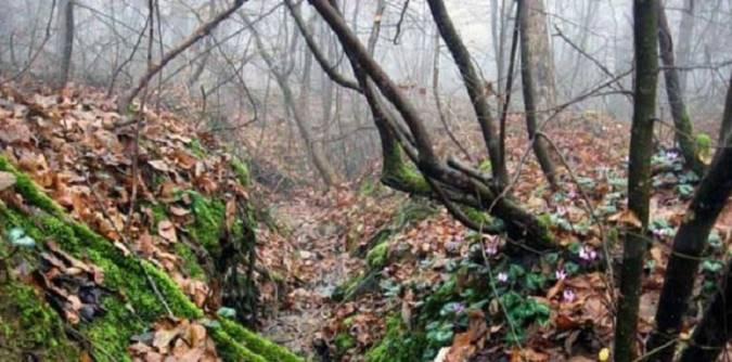 آشنایی با پارک جنگلی سراوان
