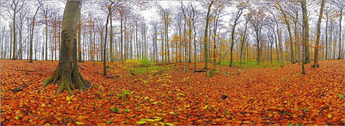 [تصویر:  panorama-01.jpg]