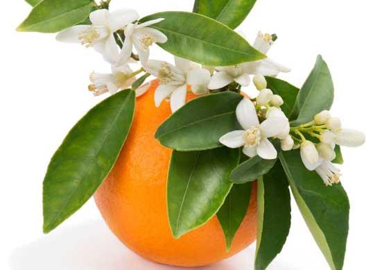 بهار نارنج از دیدگاه طب سنتی