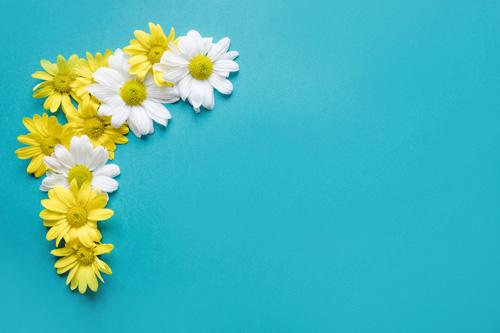 بکگراند گل