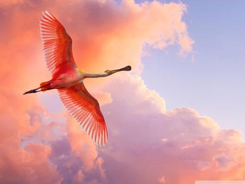 تصاویر پرندگان زیبا