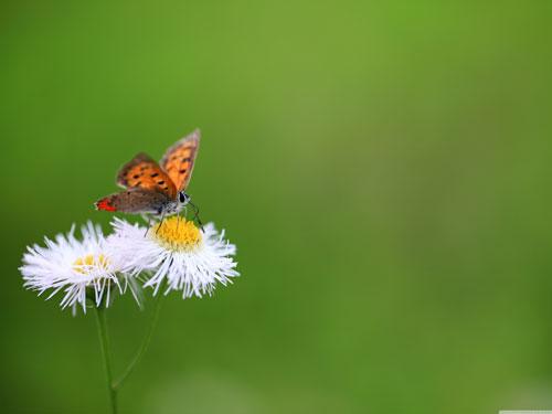 عکس پروانه باکیفیت