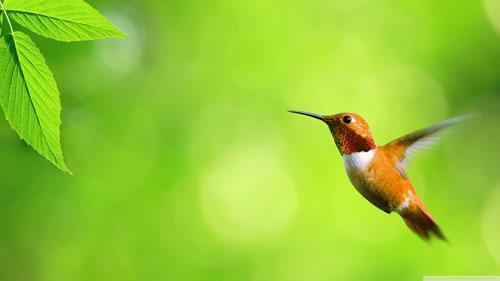 تصاویر پرندگان قشنگ