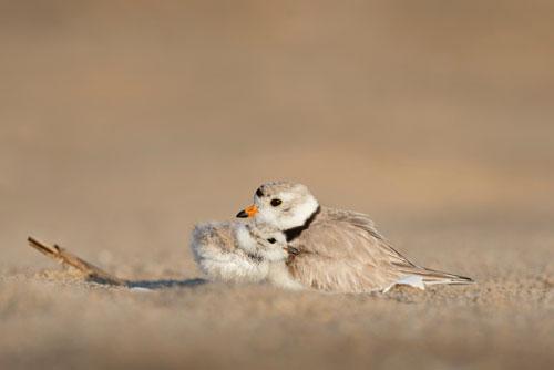 عکس پرنده باکیفیت