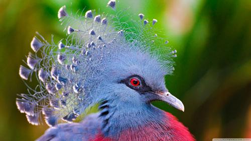 عکس پرندگان فوق العاده زیبا