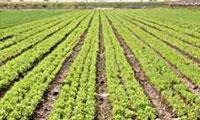 نانو تکنولوژی و کشاورزی