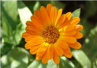 راهنمای کاشت گیاهان دارویی در خانه