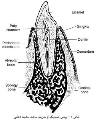 مواد دندانسازی (1)