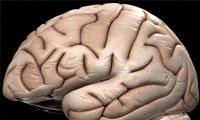 گشت و گذاری در مغز